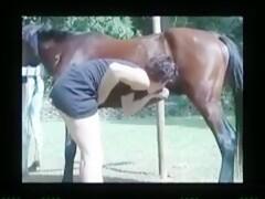 Gangbang horse Horse gangbang